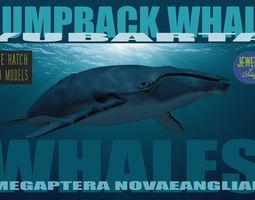 Humpback Whale 3D