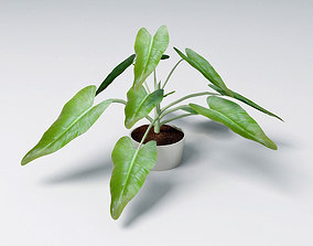 small plant 3D