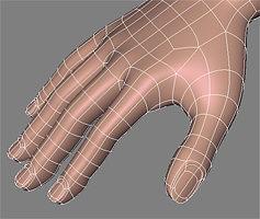 human hand 3D model | CGTrader