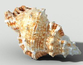 3D asset MURICIDAE Sea Shell