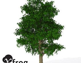 3D XfrogPlants Horse Chestnut