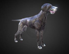 Dog Kurtshaar Grey Low Polygon Art Animal 3D asset