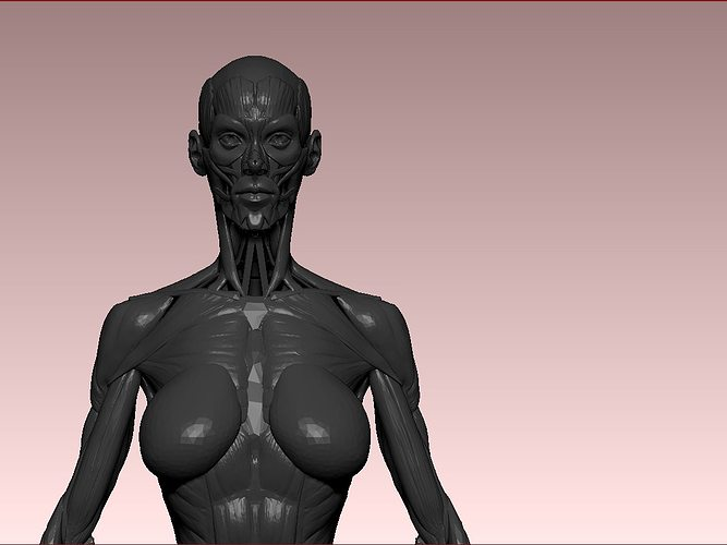 female anathomy 3d model stl 1