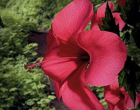 Hibiscus Flower 3D Model VR / AR ready