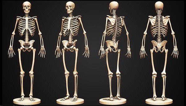 Skeleton 3D Model MAX 3DS