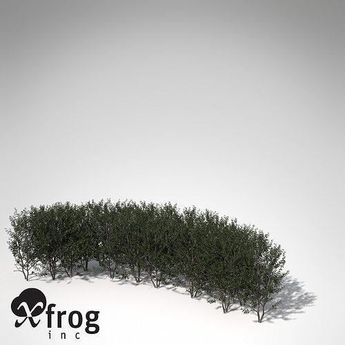 xfrogplants boxwood hedges 3d model max 3ds fbx c4d lwo lw lws ma mb 1