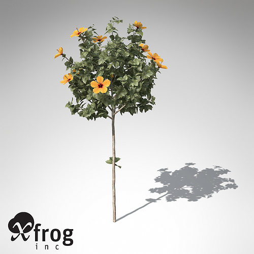 xfrogplants hibiscus 3d model max 3ds c4d lwo lw lws ma mb mtl 1