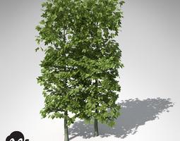 3D model XfrogPlants European Hornbeam Hedges