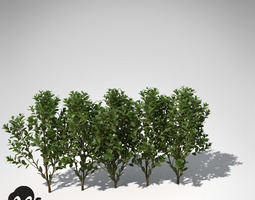3D XfrogPlants Cherry Laurel