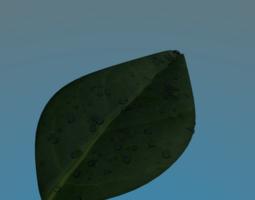 Dew on Leaf 3D asset