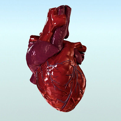 heart anatomy 3d model max obj fbx lwo lw lws ma mb hrc xsi 1