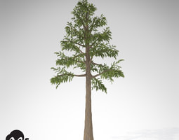 XfrogPlants Archaeopteris 3D Model