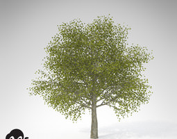 3D model XfrogPlants Katsura