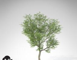 3d xfrogplants japanese walnut