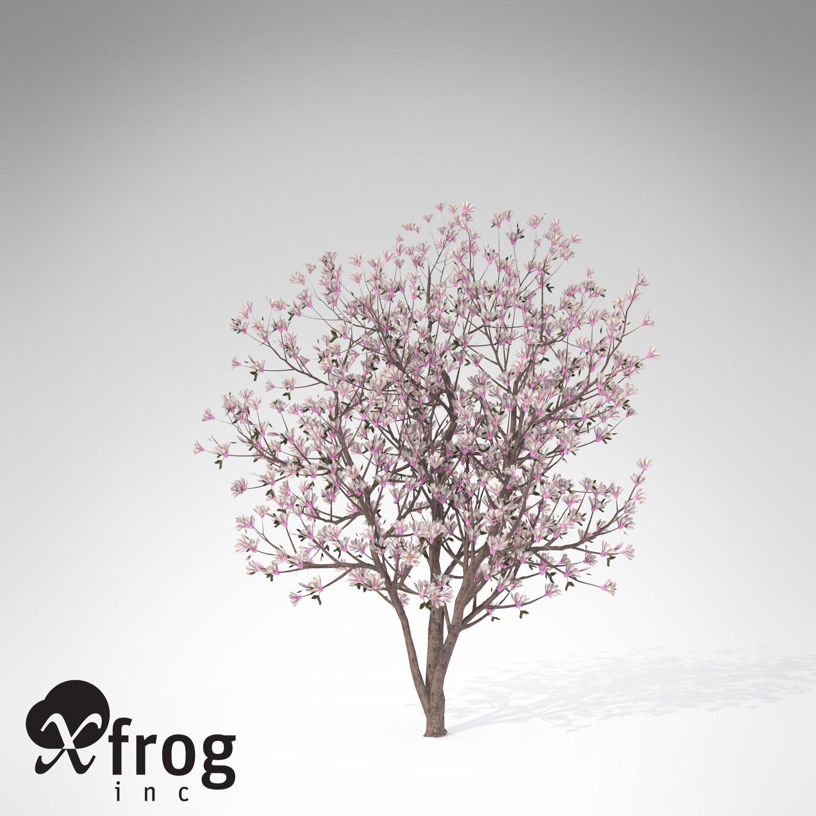 XfrogPlants Saucer Magnolia 3D  CGTrader