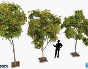 Prosopis Cineraria Trees Optimized 3D model
