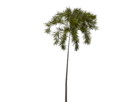 3D model game-ready Palm Tree