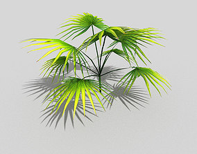 3D asset low-poly low poly tropical foliage