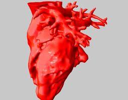 Anatomical Human Heart 3D print model