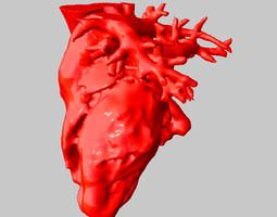 anatomical human heart 3d model stl
