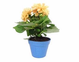 Small Plant Pot 3D print model