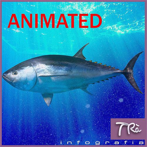 3d Tuna Fish: TUNA BLUEFIN 3D Model