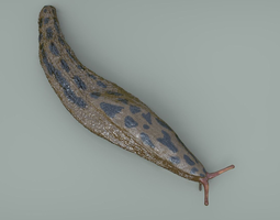 3D model Great Slug