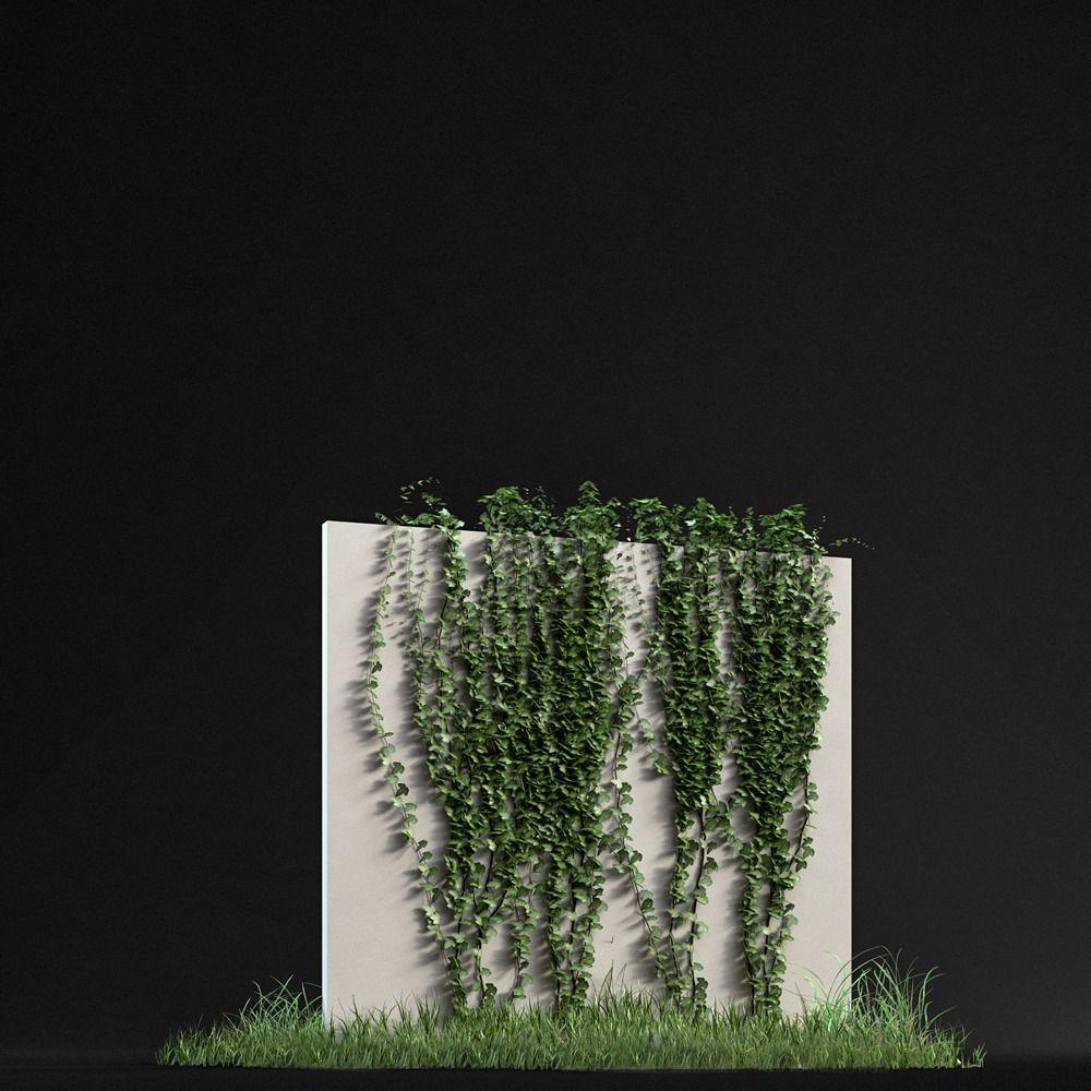 Ivy 01 3D | CGTrader