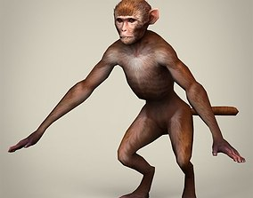 Game Ready Realistic Monkey 3D asset