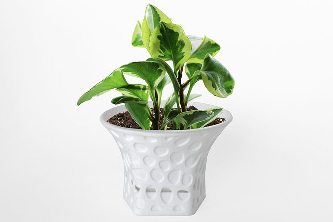 003d - planter - morph - rock pattern -  3d model stl 1