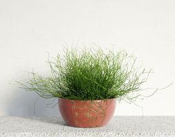 plant 48 am141 3D