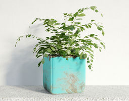 3D model plant 03 am141