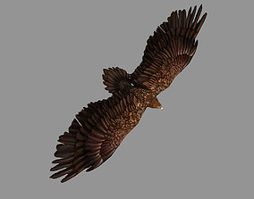Eagle Rigged Animated 3D asset