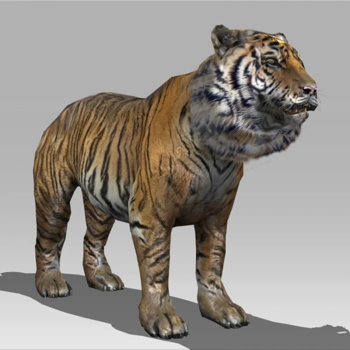 Tiger 3D Model 3D Model Animated MAX FBX MA MB