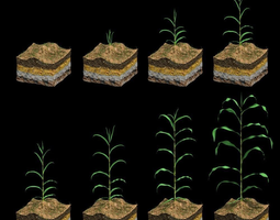 corn growth plant stages with ground 3d animated