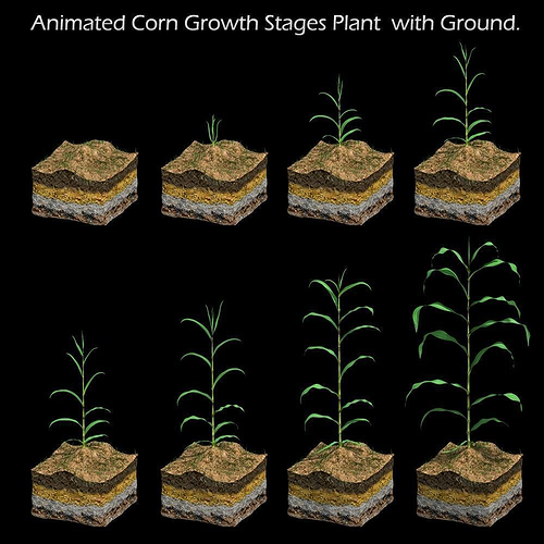 corn growth plant stages with ground 3d model animated max obj mtl 1