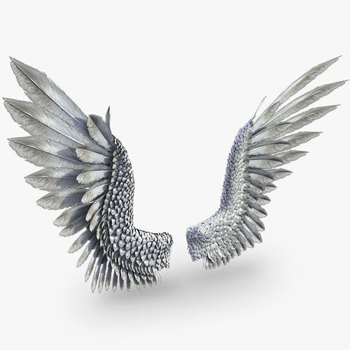pair of bird  wings 3ds max 3d model low-poly rigged animated max obj mtl 3ds fbx 1