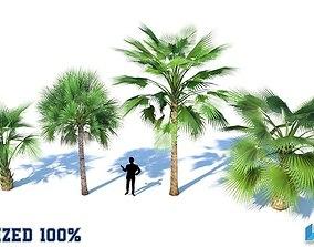 Palm Trees Optimized 3D asset