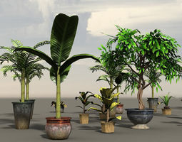 3D asset House Plants