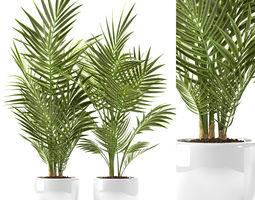 plants 124 3D