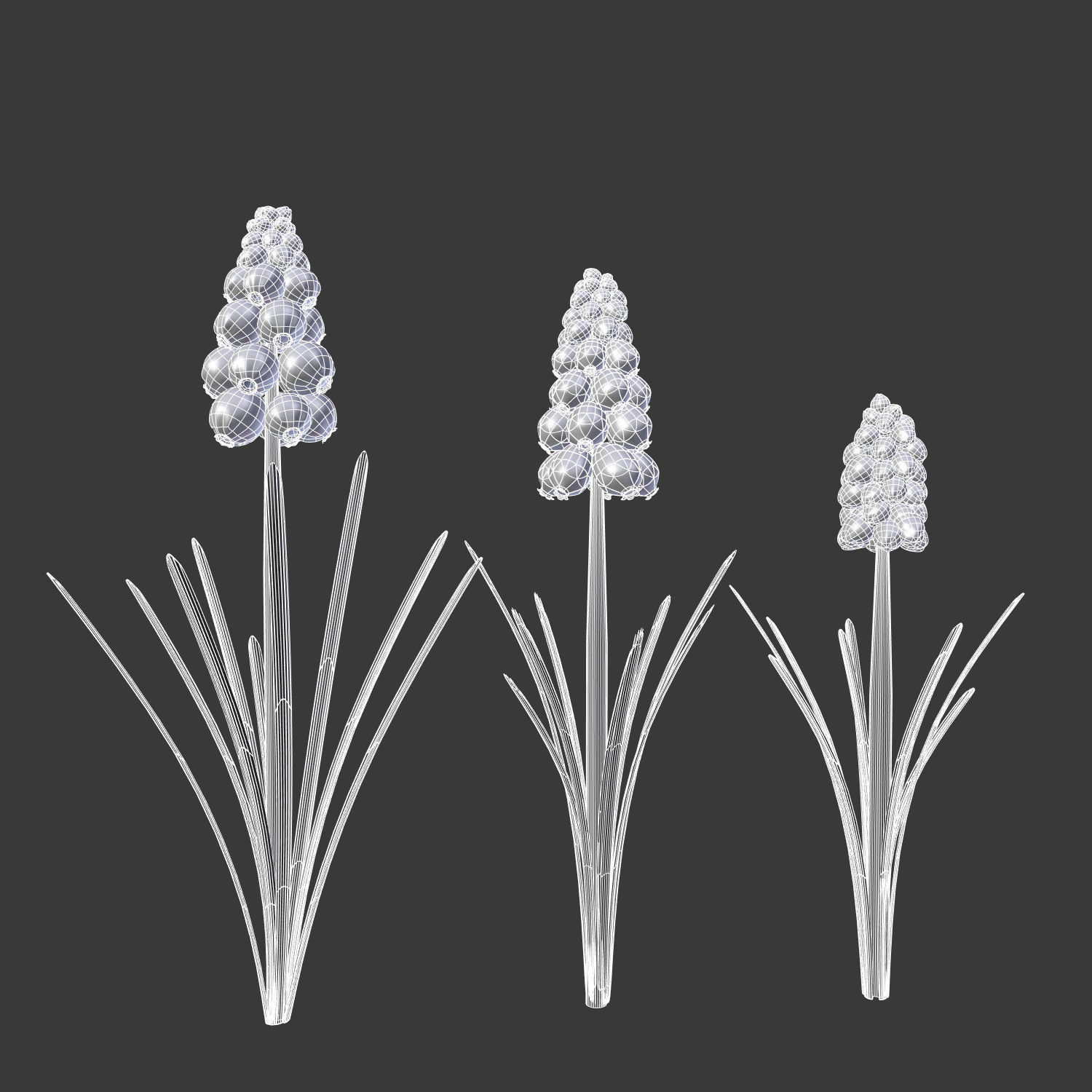 Grape hyacinth spring bulb flowers 3d cgtrader grape hyacinth spring bulb flowers 3d model obj fbx blend mtl 4 mightylinksfo