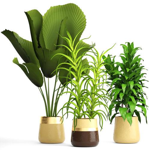 plant set 3d model max obj mtl fbx unitypackage prefab 1