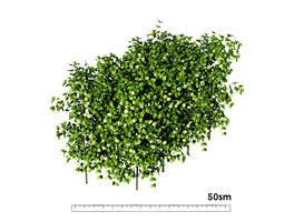 bush hedge small shrub 3D model
