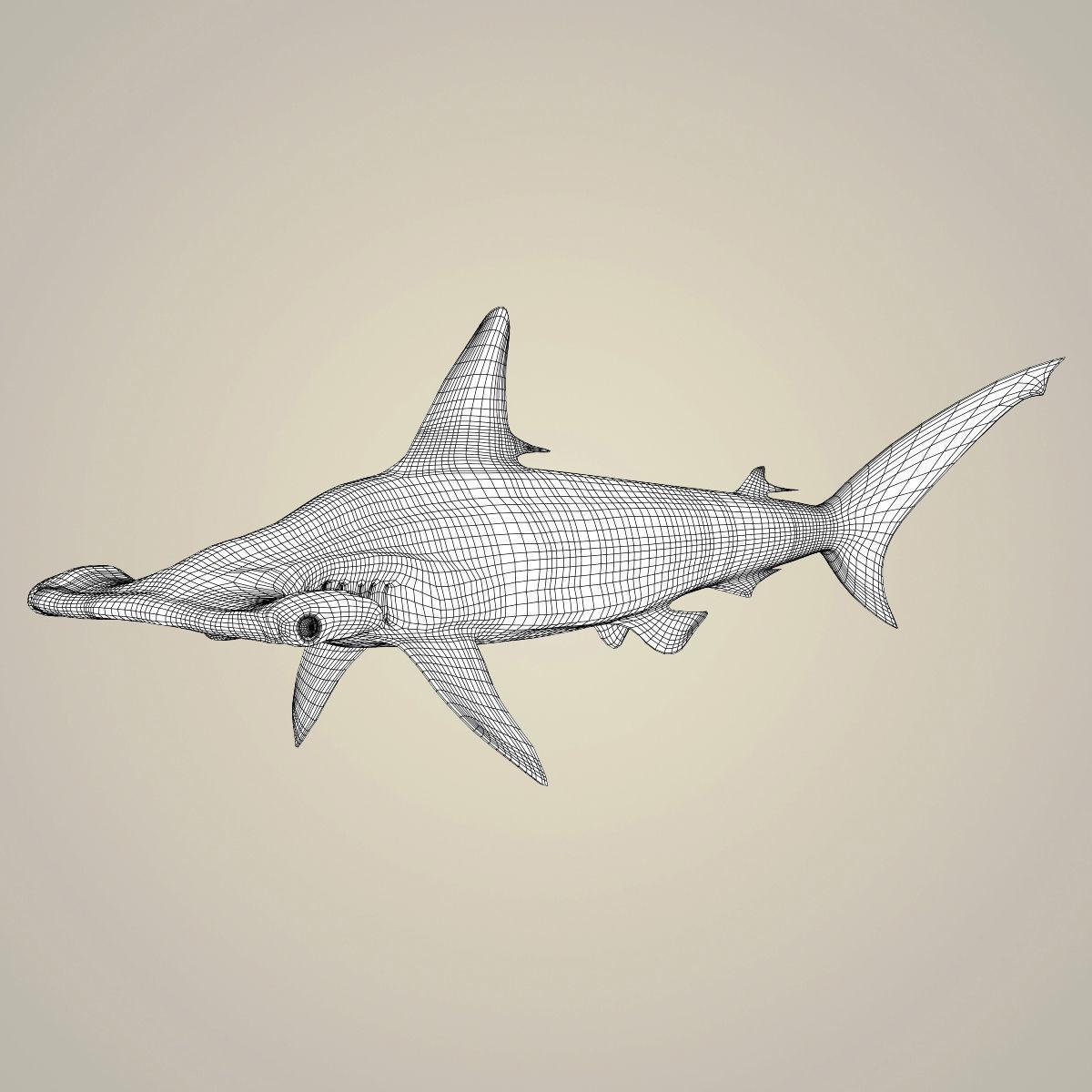3D model Realistic Hammerhead Shark   CGTrader