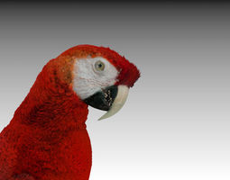 red macaw parrot animated 3d model rigged animated max