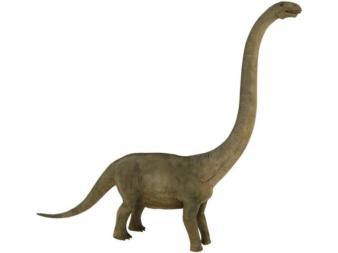 brontosaurus 3D asset | CGTrader