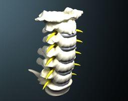 3D model neck Cervical spine with cord