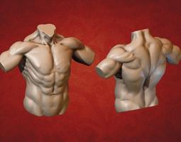 3D print model Male Torso