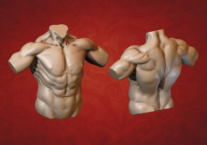 male torso 3d model obj fbx stl blend 1