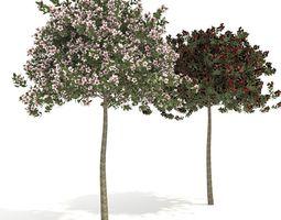 3D model apple tree everest
